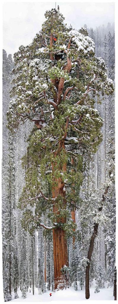 The President Sequoia, Michael Nichols