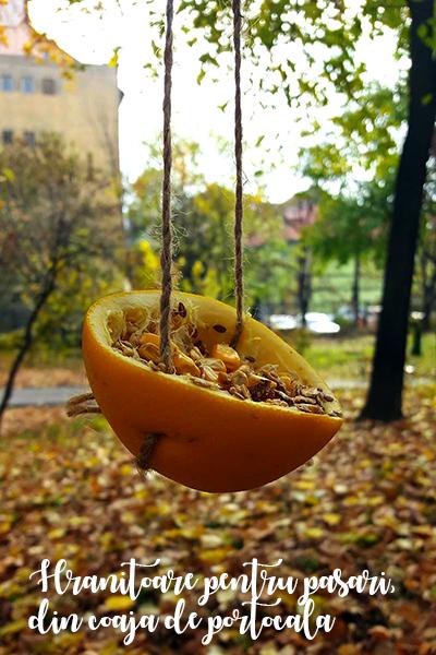 Hrănitoare pentru păsări