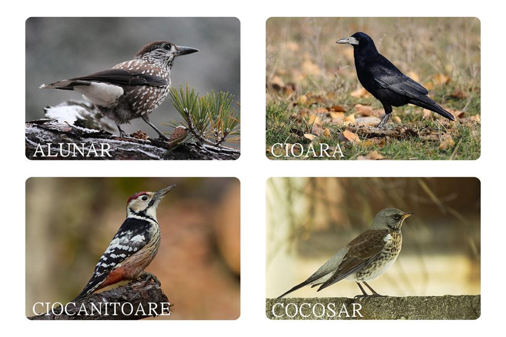Păsări din Banat