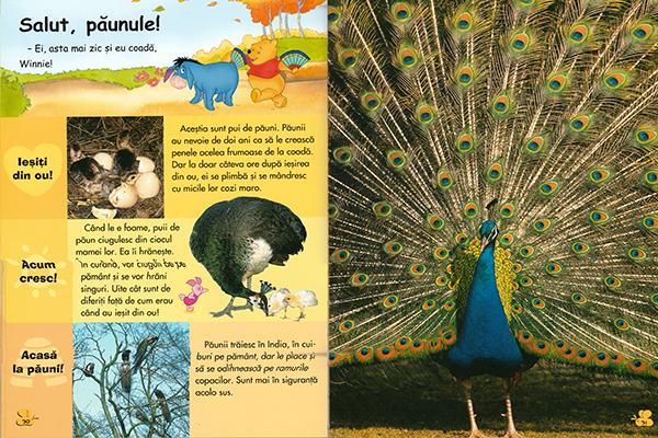 Păsările Enciclopedia Adevărul